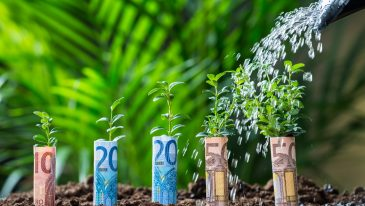 Closeup of water being poured on plants wrapped with euro bills on land